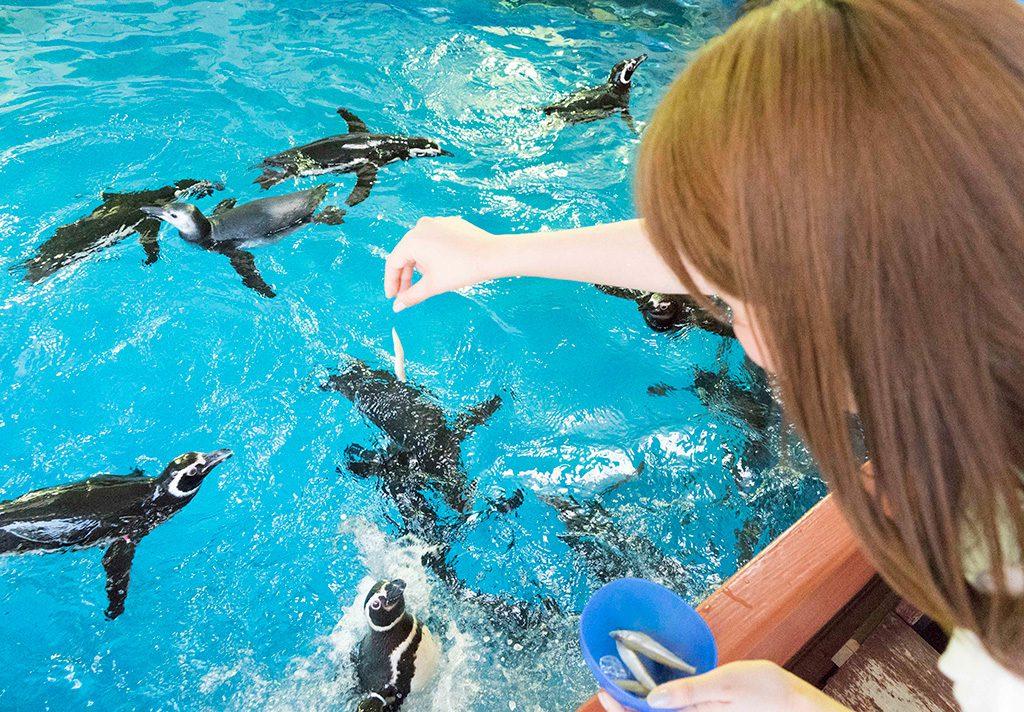 プールの上からペンギンにエサをあげる様子/神戸市立須磨海浜水族園(兵庫県)