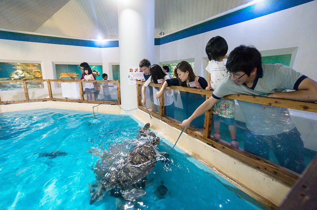 エサを食べに接近するウミガメ/桂浜水族館(高知県/高知市)