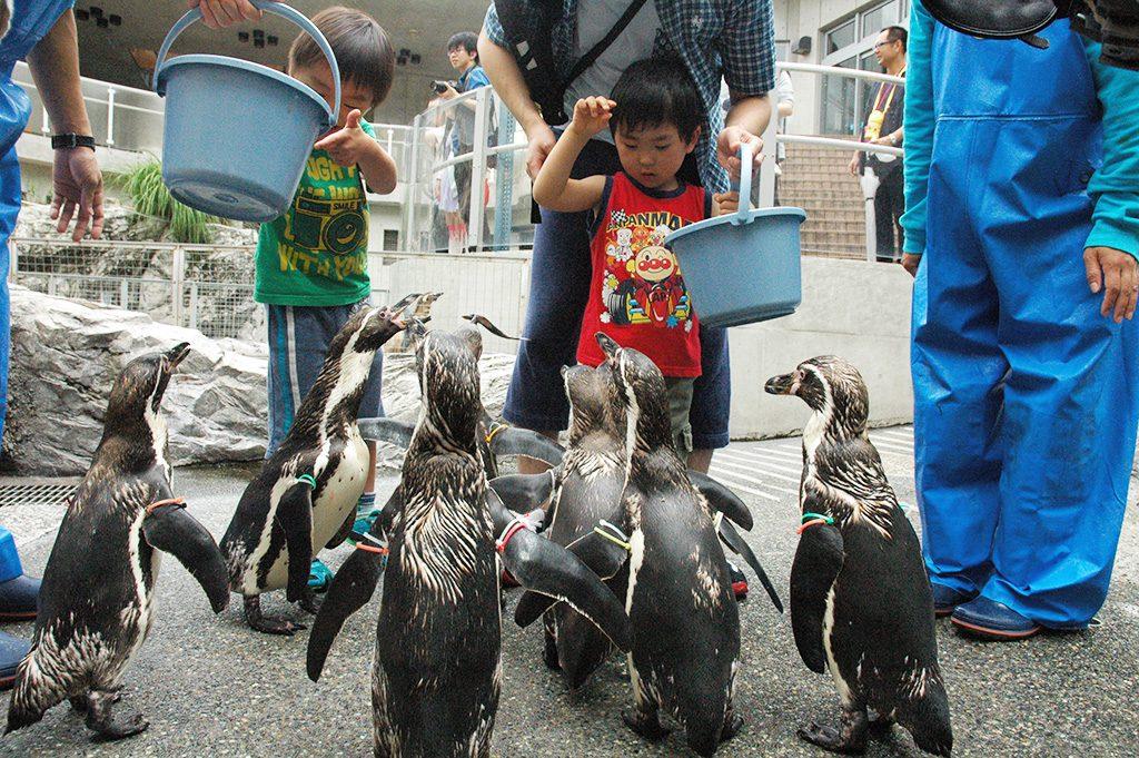 エサやり体験でエサに寄ってくるペンギンたち/長崎ペンギン水族館(長崎県)