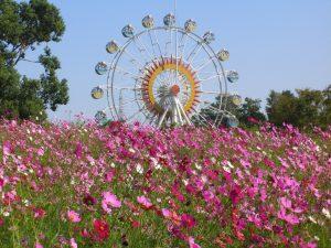 熊本市動植物園は動物とのふれあい、花畑、観覧車など親子で1日遊べる!
