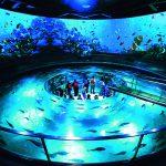 城崎マリンワールドは水族館の枠に収まらないライブ感が魅力!